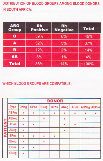 What are the main blood groups?
