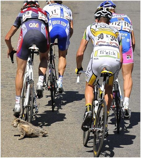 Cyclists need the eyes of a cat on the road!!