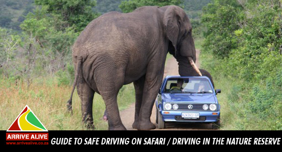 Don't risk safety when driving on safari!