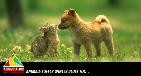 animals-suffer-winter-blues-too-big