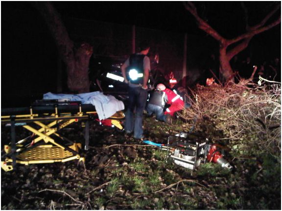 Car Rolls Into Trees along M5