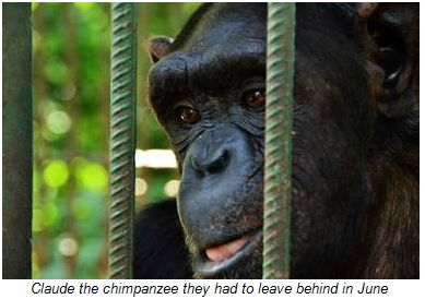 Afrika Expedition Force finds First Chimpanzee Located at Bangui Zoo