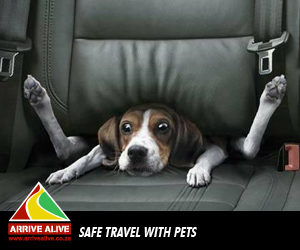 Can your pet look forward to safe holiday travels?