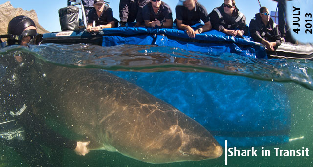 IMPERIAL Logistics partner with Two Oceans Aquarium to transport a ragged-tooth shark