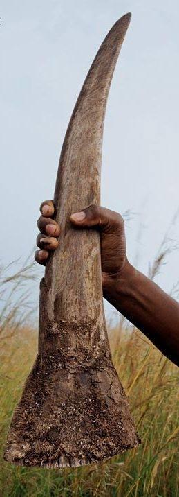 Rhino poacher sentenced to 77 years behind bars