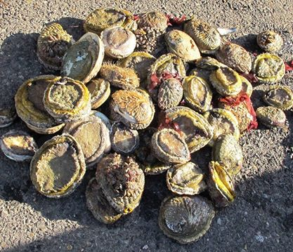 Suspect arrested with abalone worth an estimated R1 million after failing to stop at road block