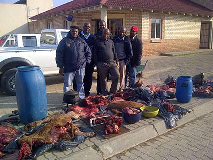 Five males arrested in Dimbaza Township for Stock Theft