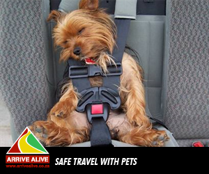 Safe-Travel-with-Pets4