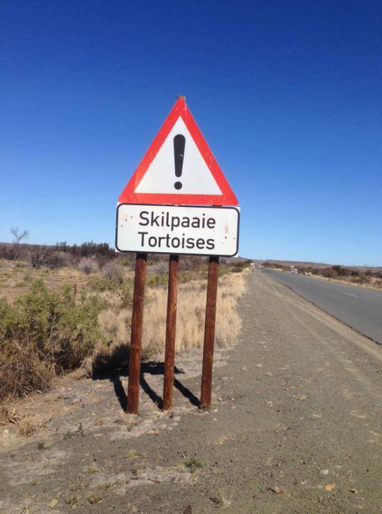 Tortoises sign
