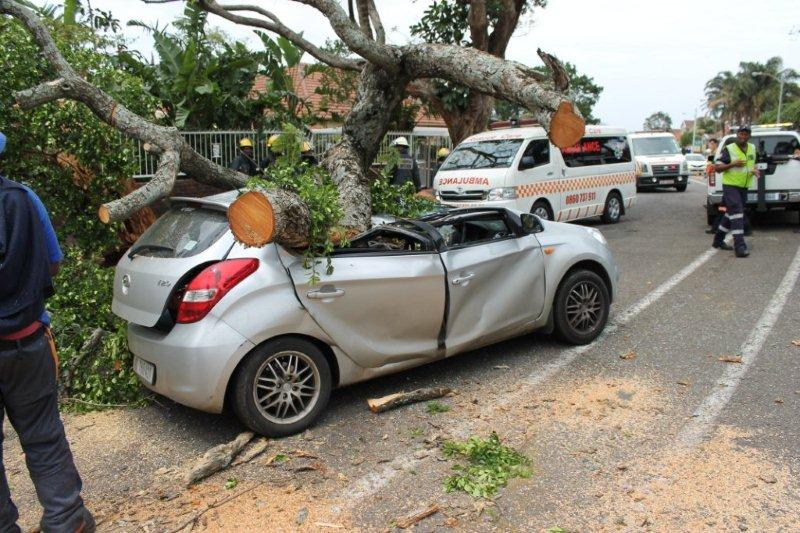 Tree Falling On Car Covered By Insurance