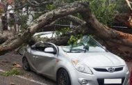 Driver miraculously escapes after tree falls on car in Durban