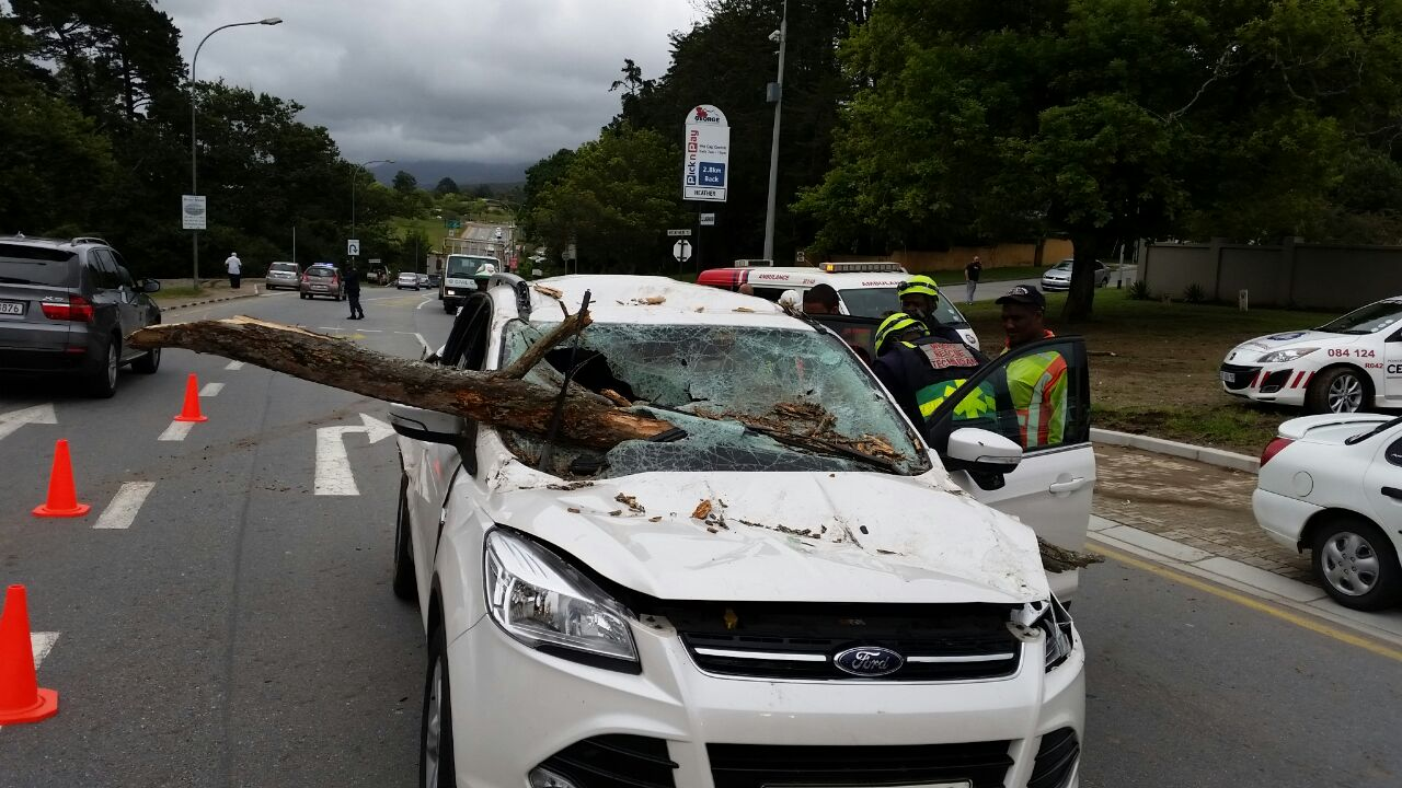 Crash into fallen tree in George leaves child with minor injuries