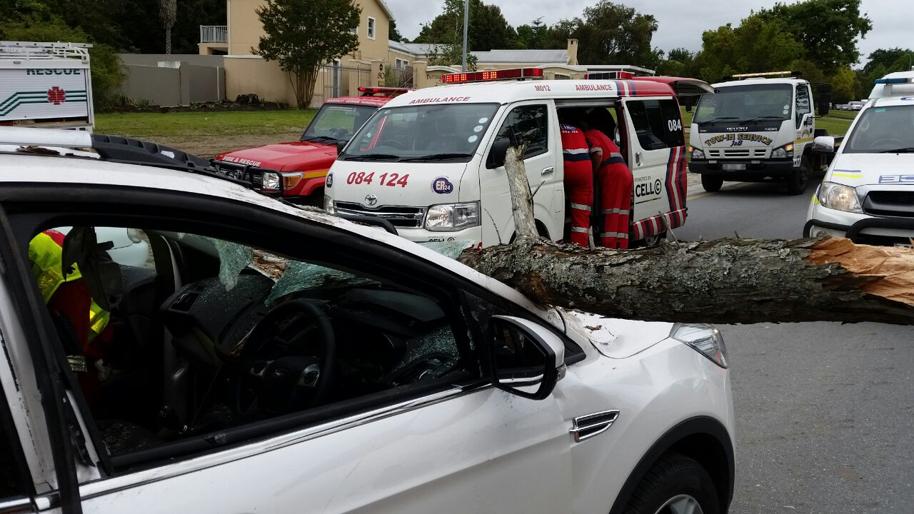 Tree trunk leaves child critical2