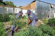 Muizenberg SAPS makes dagga arrest in Philippi