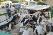 Suspects arrested and stolen livestock seized at a roadblock on the R24
