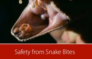 Know what to do in the event of a snake bite