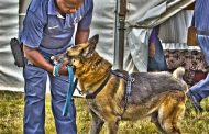 PE K9 Unit arrest suspect and confiscate drugs after tip-off