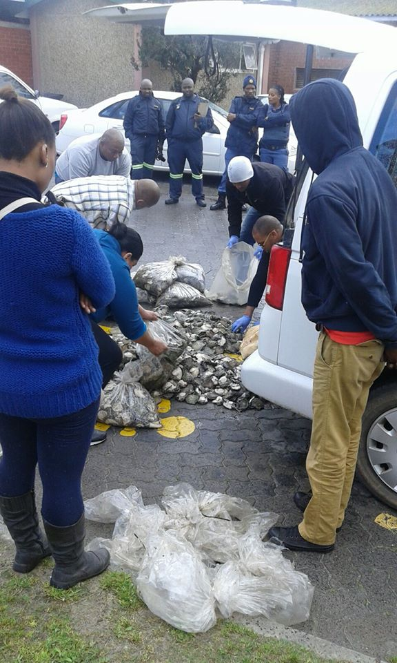 Vehicle stopped and abalone confiscated in Khayelitsha