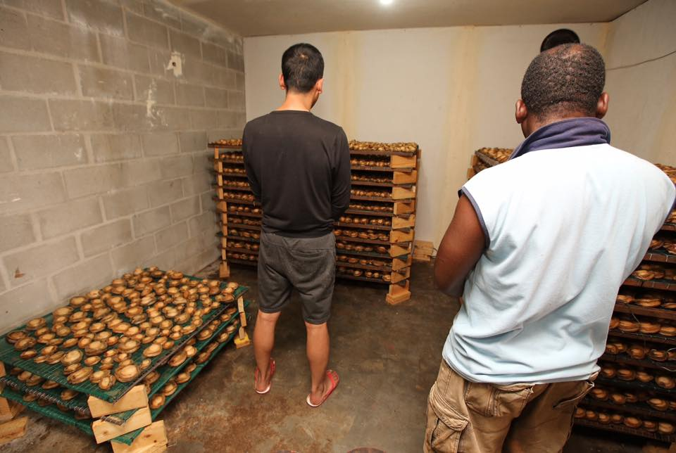 Zimbabwean and Chinese national arrested and illegal abalone facility confiscated in Gordon's Bay