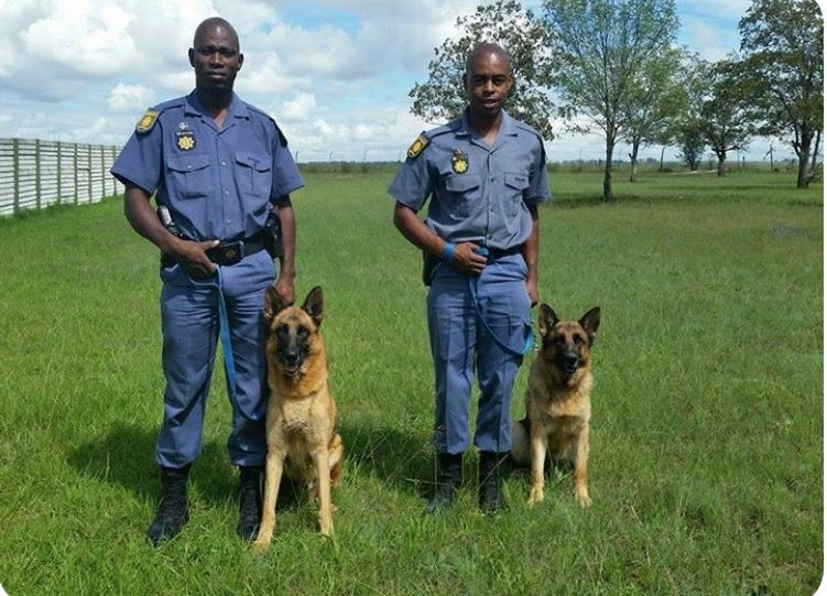 Stock thieves arrested by Bethlehem K9 Unit