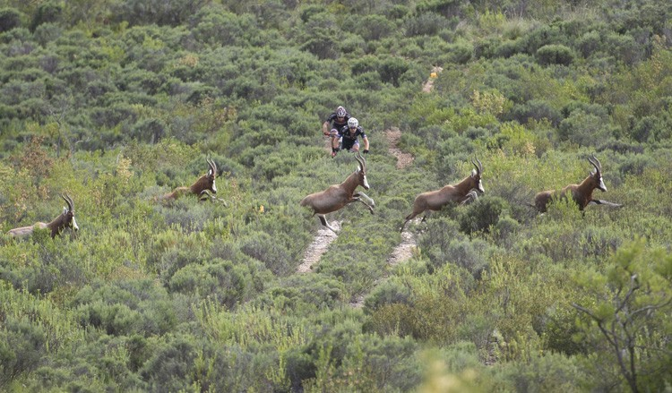 Wildlife encounters will be even more prevalent as a number of game reserves have been included to host sections of trail during the Cape Pioneer Trek international mountain bike stage race to be held in South Africa from 16-22 October. Photo credit: www.zooncronje.com