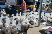 Abalone worth millions seized and two arrests effected in Beaufort West