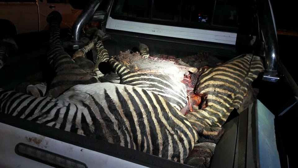 Success in Namibia in fight against poaching