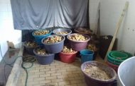 Three suspects arrested for illegal possession of Abalone, Gauteng