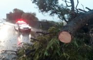 Tree falls over onto pedestrian in Malibongwe drive