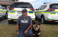 Police Dog 'Jack' continue to assist in arresting suspects