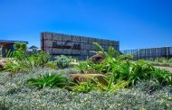 Renishaw Hills shares indigenous coastal garden tips ahead of Botanical Society's Winter Walks