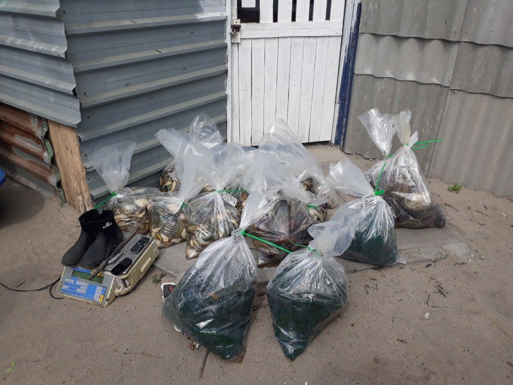 Five men arrested for unlawful possession of abalone in Strandfontein