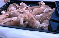 StockTheft thieves chased by farmers until nabbed in Parys: Vredefort
