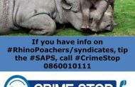 Police arrest alleged rhino poacher