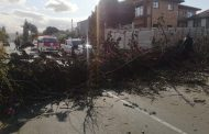Road closure due to fallen tree in Ottawa
