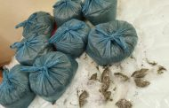 Woman arrested with dagga and other drugs in Butterworth