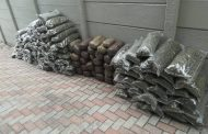 Large quantity of dagga confiscated during an intelligence-driven operation in Cotswold